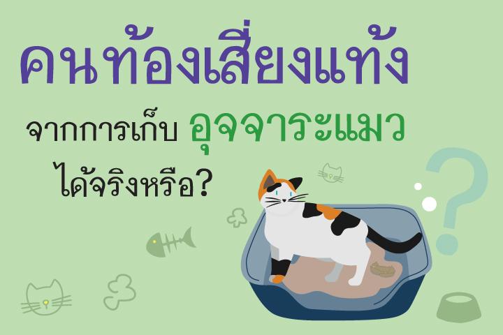 คนท้องเสี่ยงแท้งจากการเก็บอุจจาระแมวได้จริงหรือ?