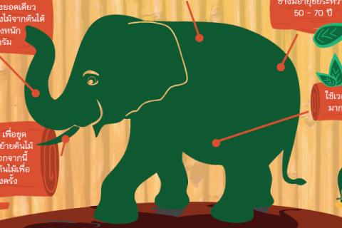 วัน 'ช้างไทย'
