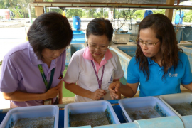 10,000 fishes given to Rama HealthyFarm