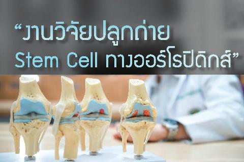 """""""งานวิจัยปลูกถ่าย Stem Cell ทางออร์โธปิดิกส์"""""""